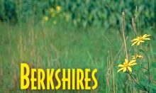 BOSBerkshires
