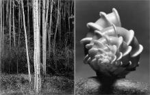 "The stunning work of Ansel Adams (""Aspens"" on the left) and Andreas Andreas Feininger (""Wentletrap Shell"" on the right) brings two masters of photography to the Berkshire Museum."
