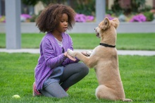 As of December 1, Annie, starring Jamie Foxx and Quvenzhané Wallis, has been downloaded by over 184,000 unique IP addresses.