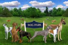 Dog Parks only just for dogs.